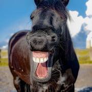 lachen astrid entius training en coaching
